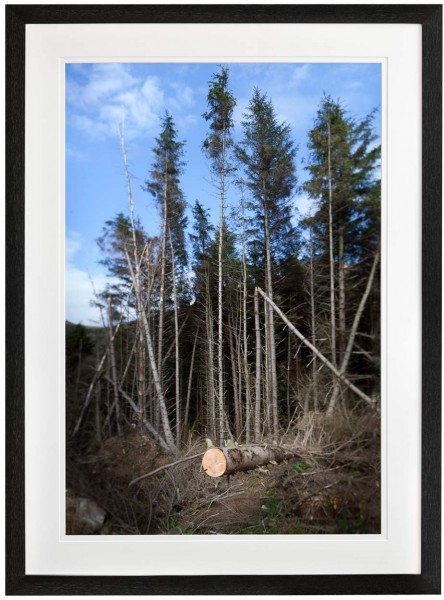 Forest scene with sawn tree black frame