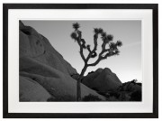 Joshua Tree black and white black frame
