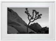 Joshua Tree black and white desert white frame