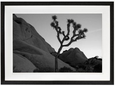 Joshua Tree black and white desert black frame